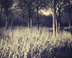 Hazy Forest Photography Black and White Dreamscape by Studio Yuki, $15.00