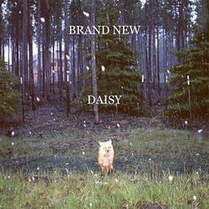 Today's album:  Brand New: Daisy.  A fantastic album.  Also an amazing band, every album has  a slightly different feel to it, and this is deffinately the darker end of the spectrum. To the point where after its release, the band said it was uncomfortable.  Give it a listen, the Check out the Devil and God are Raging inside of me.