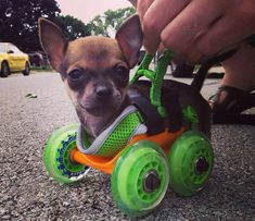 Puppy Born Without Legs Runs For 1st Time With His New Scooter!