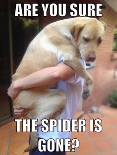 Please hold me up for a while! I hate spiders