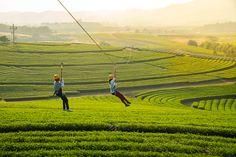 Singha Park Chiang Rai  http://goo.gl/TjPqiQ
