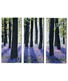 Sunny Bluebell Forest. Love Blubells. Can just loose myself in this picture.