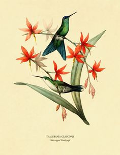 Hummingbird Posters Hummingbird Art Print Set by AdamsAleArtPrints