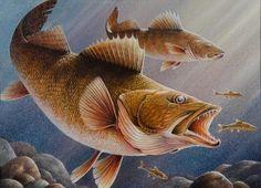 Walleye art!