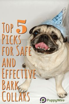 We help you find the best bark collar to stop your dog from barking in record time. See our top 5 picks and comparison right here. Best Bark Collar, Anti Bark Collar, Bark Collars For Dogs, Collor, Dog Care Tips, Dog Barking, Dog Training Tips, Animal Shelter, Dog Pictures
