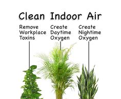Even NASA has studied the incredible purifying effect that plants have on indoor air. These are some of the best houseplants that improve indoor air quality - Modern Inside Plants, Ivy Plants, Garden Plants, Small Plants, Indoor Plants Clean Air, Best Indoor Plants, Indoor Ivy, Container Gardening, Gardening Tips