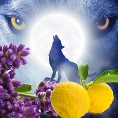 Werewolf Fragrance Oil #candlemaking #soapmaking