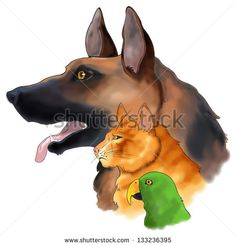 The sketch drawings of three pets looking forward in a column consists of dog, cat, and a parrot bird in isolated background, create by vector