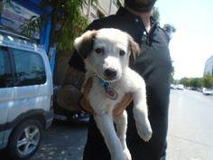 Το μικρούλι της φωτογραφίας, βρέθηκε σε κεντρικό δρόμο της Θεσσαλονίκης πριν λίγες ημέρες