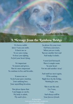 Pet Loss Poems is part of Pet loss poem - Four pet loss poems to help grieve for the loss of a dog, but also to celebrate the unconditional love and the special forever bonds between us and our dogs Pet Quotes Dog, Pet Poems, Pet Loss Quotes, Animal Quotes, Losing A Dog Quotes, Baby Quotes, Dog Grief, Pet Loss Grief, Loss Of Dog