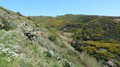 Monte Calamita botanic, Capoliveri, Elba island, ItalyMonte Calamita, Capoliveri, Isola 'Elba