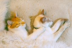My cats are sleeping  - cute cats, cats lovers, my cats, sweet cats