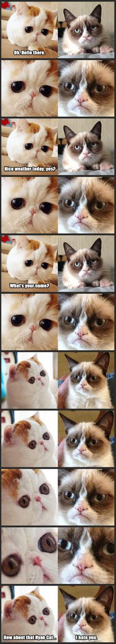 The two types of cats that I want! A grumpy cat and a smooshed-face, big eyed cat!