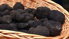 En 2009, la ville de Sarlat créait dans le Périgord noir, le premier marché de gros aux truffes d'Aquitaine. Chaque mercredi de décembre à février, professionnels et négociants se retrouvent sous les arcades de la mairie. (Crédit photo David Raynal)