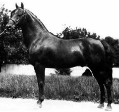 Troubadour of Willowmoor f.1910