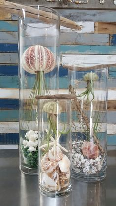 Air Plant Decor Ideas with Air Plant Jellyfish Picture 22 - Awesome Indoor & Outdoor Creative Air Plant Decor Ideas with Air Plant Jellyfish Picture 22 .Creative Air Plant Decor Ideas with Air Plant Jellyfish Picture 22 . Mini Terrarium, Air Plant Terrarium, Air Plant Display, Plant Decor, Succulents Garden, Planting Flowers, Jellyfish Pictures, Best Indoor Plants, Perfect Plants