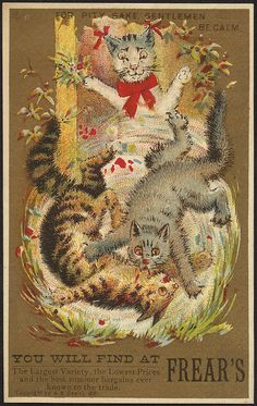 """""""For pity sake gentleman, be calm."""" ~ 1881 cats trade card"""