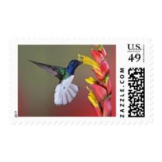 #flower - #Hummingbird feeding on nectar on a postage stamp