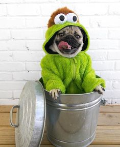 Silly Dogs, Funny Dogs, Cute Dogs, Chien Halloween, Sweet Dogs, Dachshund Funny, Doug The Pug, Pug Pictures, Dog Photos