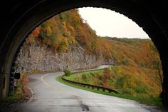 Tunnel of fall color on the Blue Ridge Parkway near Asheville NC - at Craggy Gardens