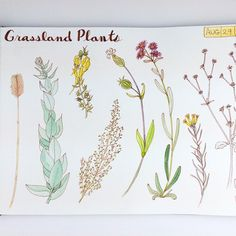 Repost of the grassland plants page in my sketchbook.