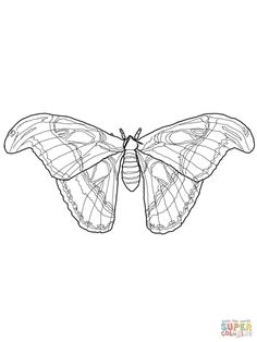 Silkworm Moth Caterpillars Coloring Page | Free Printable Coloring