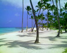 ▷ Occidental Grand Punta Cana - All Inclusive Resort Punta Cana Beach, Bavaro Beach, Vacation Destinations, Dream Vacations, Great Places, Places To See, Hidden Places, Amazing Places, Cabo San Lucas