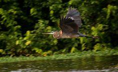 Paraísos hondureños atraen a avituristas del Reino Unido, Sudáfrica y Estados Unidos