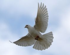 The Wings of Dove