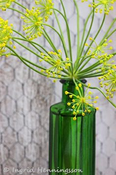 FLOWERS by ingrid and titti-Bouquets of Herbs-Ingrid Henningsson-Of Spring and Sum