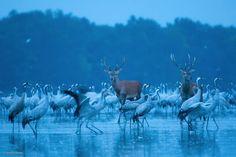 Фотографии дикой природы. Что может быть лучше. Обсуждение на LiveInternet…