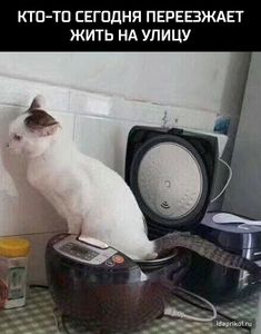The only cat who gave a shit. but it was literal and in the rice cooker: 17 Times Cats Showed Their Owners That They Owned Them Funny Cat Jokes, Smart Jokes, Funny Cat Videos, Stupid Funny Memes, Funny Cats, Funny Animal Images, Funny Animals, Funny Pictures, Cute Animals