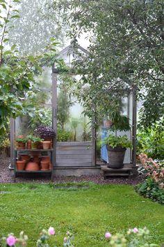Balcony Garden, Indoor Garden, Garden Plants, Garden Sheds, Moon Garden, She Sheds, Greenhouse Gardening, Back Gardens, Houseplants