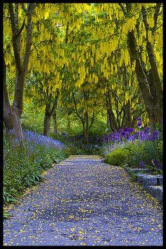 Golden canopy - VanDusen Botanical Garden, Vancouver, British Columbia, Canada