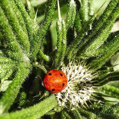 #eastermonday #afternoon #nature #april #ladybug ##liguria #genova #walking