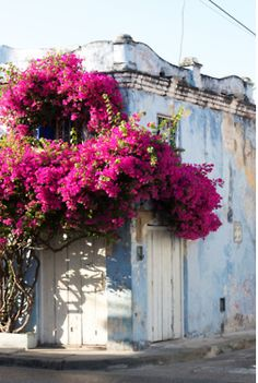 rustic building with vibrant pink flowers