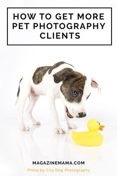 Need more clients for your pet photography business?  Here are some great tips! http://www.magazinemama.com/blogs/editors-blog/tagged/marketing_tips?page=3