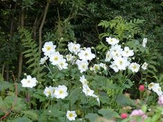 Top 5 perennial (very) late flowering Top 5, Horticulture, Perennials, Floral Arrangements, Matins, Green, Flowers, Moment, Deco