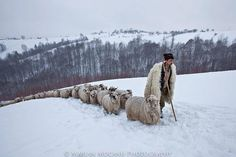 """Bran, Brasov County, Romania """"Shepherd with his sheep"""" photograph by Marian Mocanu Shepherds Hut, The Shepherd, Perfect World, Medieval Fantasy, Countries Of The World, Great Photos, Animals And Pets, Beautiful Places, Places To Visit"""