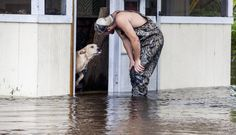 "8 October 2015 (Photo: ""This dog was abandoned at a flooded home on Waccamaw Dr. Some Good Samaritans rescued him"" by Charles Perry [@TSN_CharlesPerr] #SCFlood #SCflooding) ~ ""Dog Refuses To Leave The Side Of Man Who Saved Him From Flood"" by Stephen Messenger 