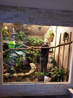 iguana enclosure decor & iguana enclosure ` iguana enclosure indoor ` iguana enclosure diy ` iguana enclosure ideas ` iguana enclosure how to build ` iguana enclosure habitats ` iguana enclosure decor