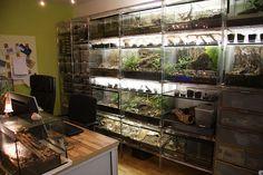 Reptile Decor, Reptile Room, Reptile Cage, Tarantula Enclosure, Snake Enclosure, Terrarium Tank, Aquarium Terrarium, Paludarium, Vivarium