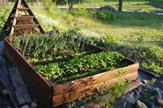 Podwyższone grządki są znacznym ułatwieniem w uprawie warzyw. Warto polecić ich założenie zarówno początkującym, jak i doświadczonym ogrodnikom.