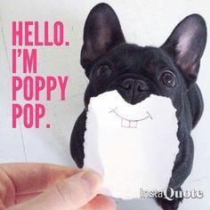 """Hello, I'm Poppy Pop"", a French Bulldog Puppy who thinks he's a Rabbit ; )"