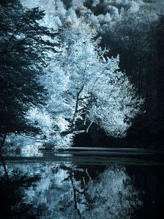 Incredible Example of Infrared Photography #Pinterest Pin-a-way