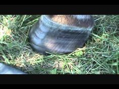 Trimming to the TRUE Anatomy of the Equine Hoof Part 7