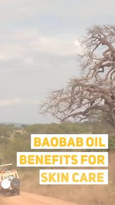 When you learn of the benefits of this almost secret ingredient you'll understand why skin care brands such as Bellame a Baobab Benefits, Oil Benefits, Baobab Oil, Baobab Tree, Skin Structure, Skin Care Remedies, Natural Remedies, Influencer, Hand Care