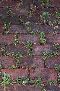 "get rid of grass in walks: baking soda neutralizes the ph in the soil and nothing will grow there. I use baking soda in a 6"" wide area around all of the edges of my flower beds to keep the grass and weeds from growing into my beds. Just sprinkle it onto the soil so that it covers it lightly. I usually have to do this twice a year - spring and fall."