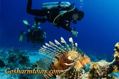 Sharm El Sheikh diving, enjoy the best diving courses and diving in Sharm El Sheikh with our English diving centre. Mob +2 01211105565  http://gosharmtours.com/sharm-el-sheikh-diving
