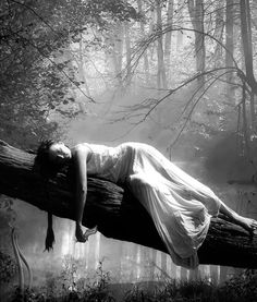 This would totally be me dozing in the forest because in my Wonderland there is no bugs or spiders :)